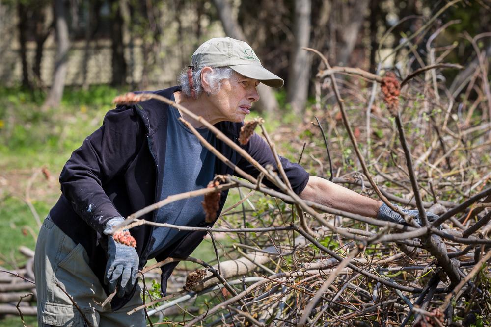 Woman gathers brush at Schmanska Park