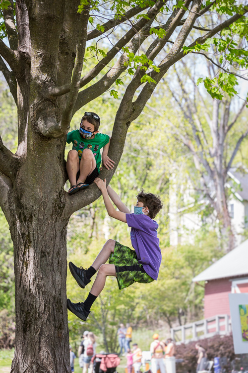 Kids climb trees in the park
